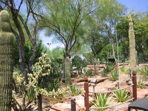 Ethel M Chocolate Factory And Botanical Cactus Gardens by 17 Best Images About Desert Landscape Design On