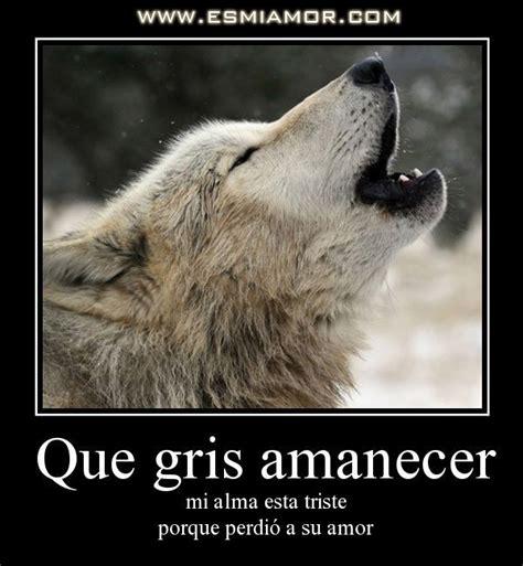 imagenes de lobos tristes imagenes de lobos enamorados con frases imagui