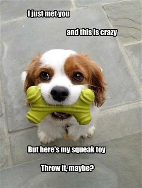 puppies for you 25 best ideas about puppy meme on quotes