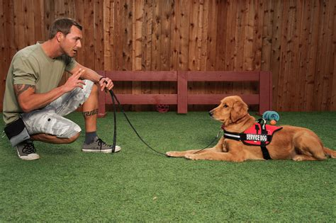 how service dogs are trained service i brandon mcmillan brandon mcmillan s canine minded
