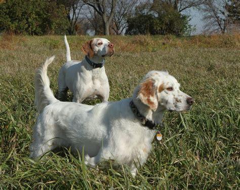 adoption illinois illinois birddog rescue