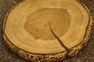 Tree Ring - tree ring 3674 southwest photo journal