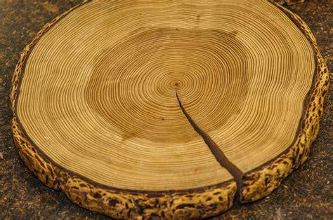 tree ring tree ring 3674 southwest photo journal