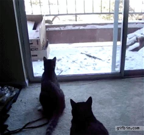 Cat Running Into Glass Door 24 Epic Walking Through The Glass Door Fail Gifs The Wondrous