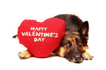 happy valentines day animals pets micritterchitter page 6