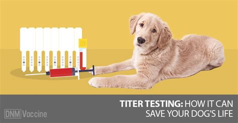 titer test for dogs titers an important tool to prevent vaccination in dogs