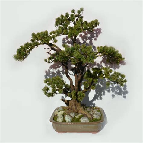 Bor Bonsai umetni bonsai umetni bonsaji pinija borovec 65 cm bonsai