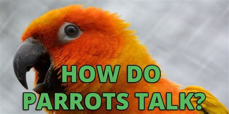 let s learn about unique birds letã s learn about animals books how do parrots talk uncover the secrets to talking birds