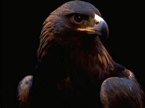 wallpaper dark bird wallpapers hd desktop wallpapers free online bird
