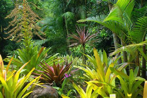 Tropical Plants For Backyard by Tropical Gardens Diaco S Garden Nursery