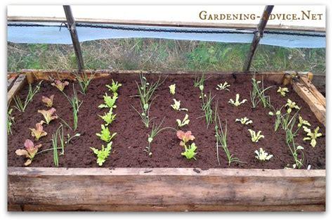 what soil to use for raised vegetable garden the raised bed vegetable garden