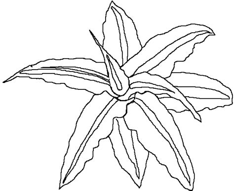 tropical leaves coloring pages free tropical leaves coloring pages