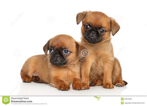 puppies free puppies royalty free stock image image 23614606