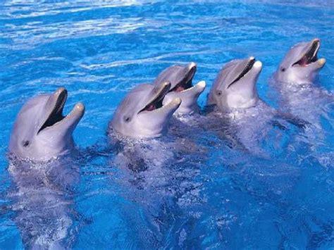 animales del mar gran delf n los delfines del zoo de madrid predicen que ganar 225 espa 241 a