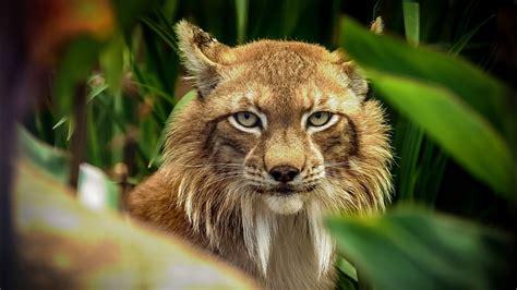 fotos animales silvestres fotos de animales salvajes silvestres y domesticos taringa