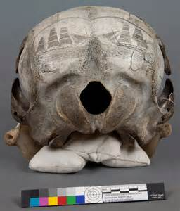 Scrimshaw skull was canvas for whaling artists life 25 october