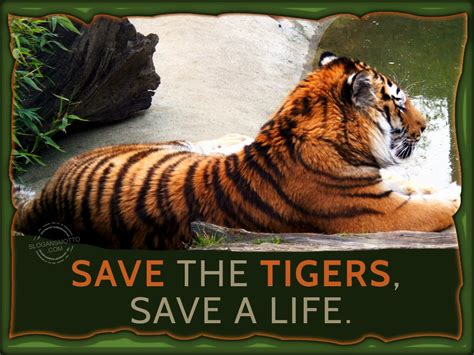 save a save tigers slogans