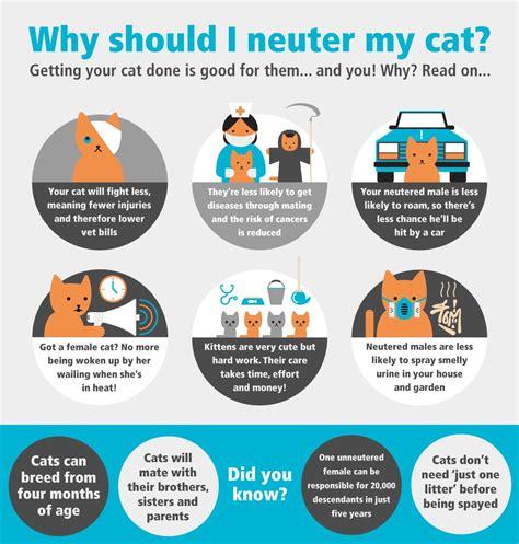 neutering a neutering