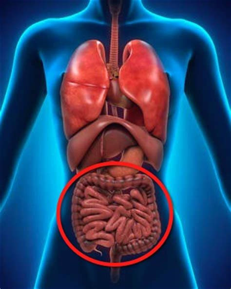Liver And Small Intestine Detox by Detox Cleanse