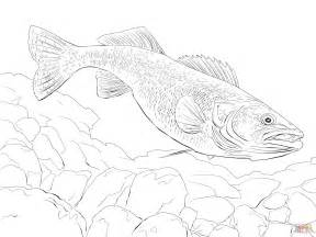 Walleye Coloring Page walleye fish coloring page free printable coloring pages