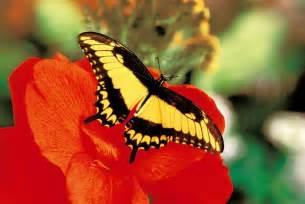 jardins des papillons hunawihr