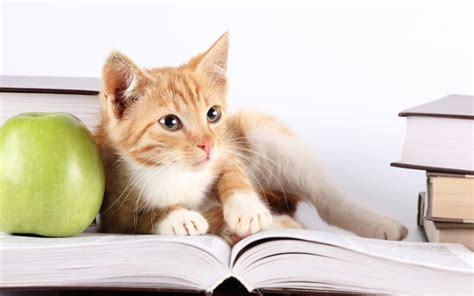 wallpaper cat book 21 study wallpapers book backgrounds images pictures