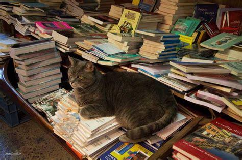 libreria dell acqua alta venezia libreria acqua alta a venezia viaggi taccuinoviaggi