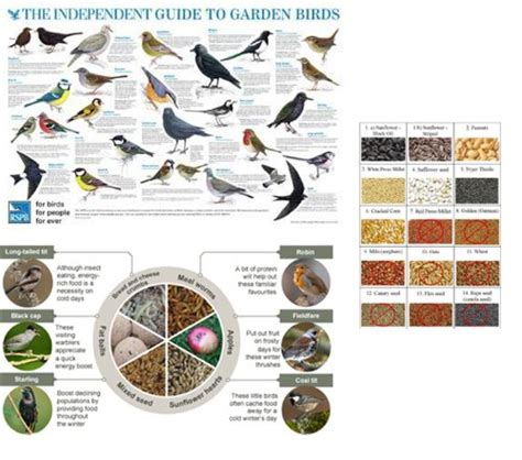 uccelli da giardino mangiatoia per uccelli a colonna da giardino