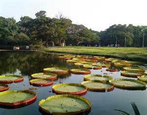 Indian Botanical Garden Dhaka V S Kolkata Page 13