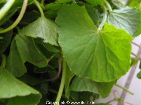 manfaat nizoral ketoconazole mg
