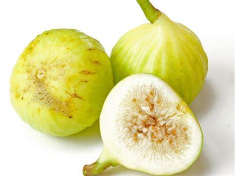 Bibit Alpukat California fig white marseilles 2 plants ships march june baker
