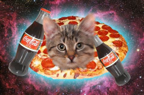 pizza kittens caterville pizza cat gifs