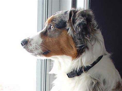 helping dogs with separation anxiety separation anxiety and what you can do about it
