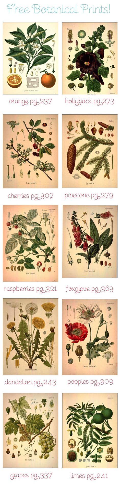 printable botanical art free botanical art house ideas pinterest botanical