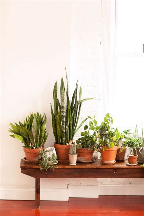 plant bench indoor best 25 plant table ideas on pinterest window plants