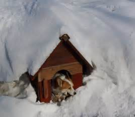 tips for heating a dog house during the winter