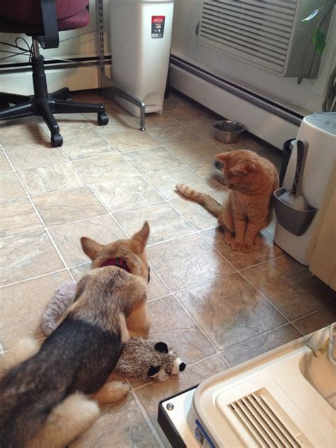 do cats and dogs get along how to help your and cat get along hungry and fit