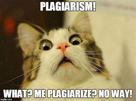 Plagiarism Meme - scared cat meme imgflip