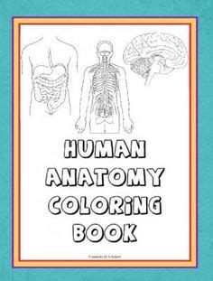 anatomy and physiology coloring workbook answers page 62 1000 images about anatomy on anatomy and