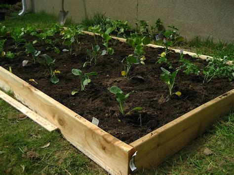 cheap raised beds super cheap and simple raised garden bed garden state