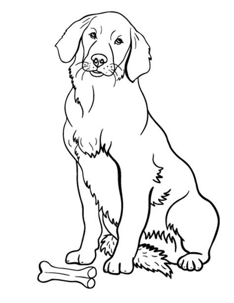 free coloring pages of a cute golden retriever