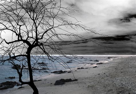 Modern Colors by Nature Sad Tree By Munir Alawi