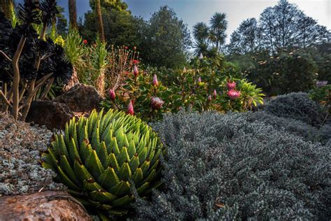 September Floral Garden Events In The Blue Mountains The Blue Mountains Botanic Garden Mount Tomah