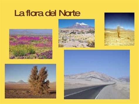 imagenes de flores de la zona norte zona norte