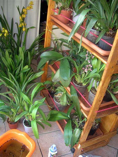 orchidee in casa le orchidee e gli auguri di carla da gradisca d isonzo