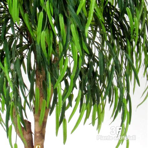 salice piangente in vaso salice willow medium 164 uvr altezza cm 175 216 vaso