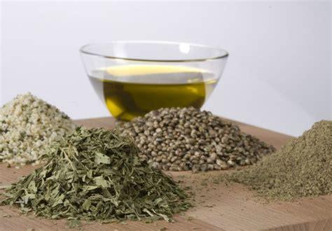 olio di canapa alimentare l olio di canapa e le sue mille virtu cannabis