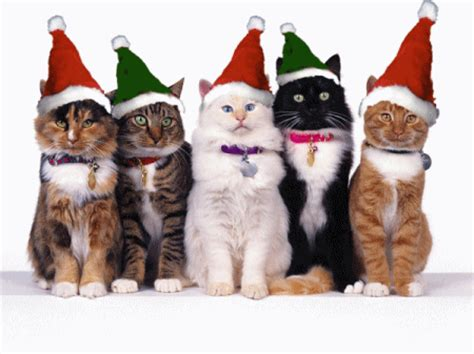 images of merry christmas kittens angry bear 187 happy holidays from all the bears