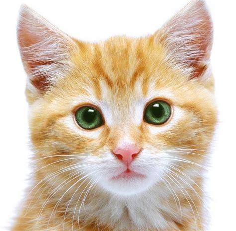 un gato a cat 842635095x gelb katze bilder gelb katzebild und foto tier bilder
