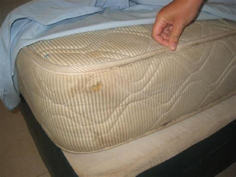 bed bug sores bed bug sores back 1 picture of melati tanjung motel pantai cenang tripadvisor